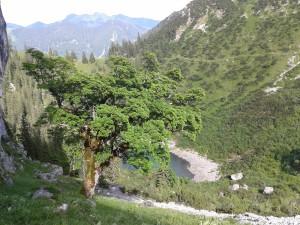 04 20150625_165539 Riederecksee mit Bergahorn an den Blankenstein-Südwänden